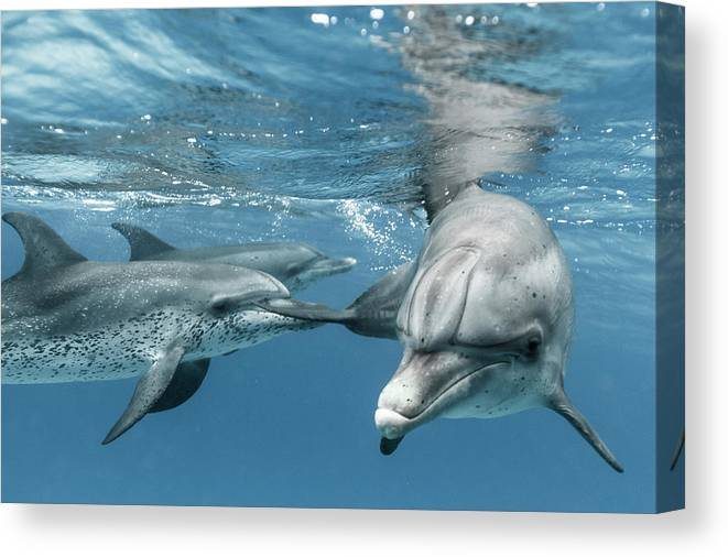 Underwater Canvas Print featuring the photograph Coming Close by Kerstin Meyer
