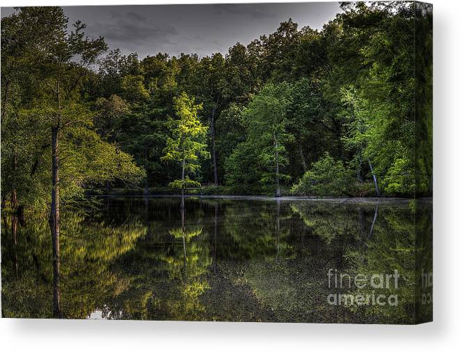2014 Canvas Print featuring the photograph Cypress At Dusk by Larry Braun