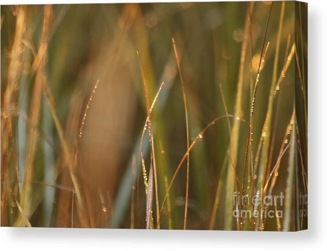Dew Canvas Print featuring the photograph Dewy Grasses by Nadine Rippelmeyer