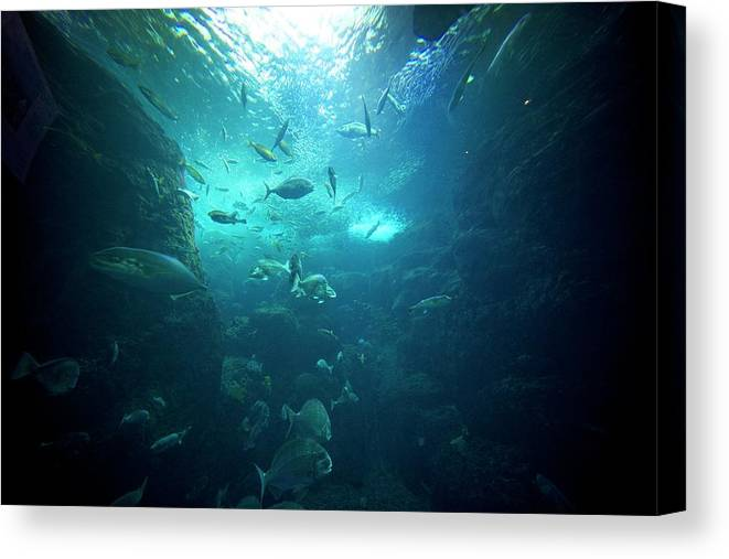 Underwater Canvas Print featuring the photograph Fishes by By Tddch