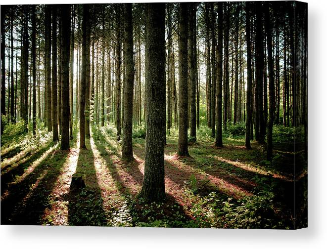 Tranquility Canvas Print featuring the photograph Galarneau by Guillaume Seguin