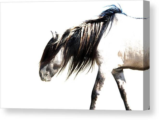 Sundowner Canvas Print featuring the photograph Ghost Horse by Lourie Zipf