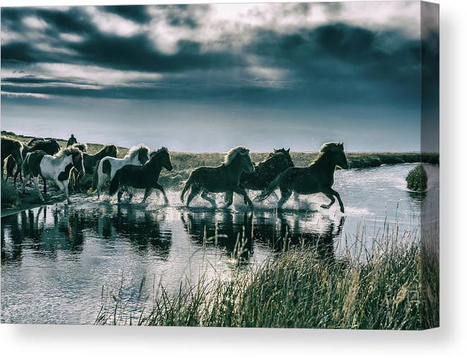 Horse Canvas Print featuring the photograph Group Of Horses Crossing A River by Arctic-images