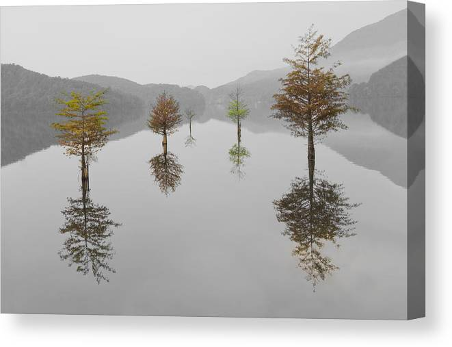Appalachia Canvas Print featuring the photograph Hanging Garden by Debra and Dave Vanderlaan