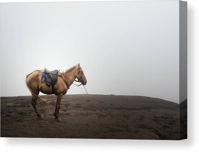 Horse Canvas Print featuring the photograph Horse On A Mountain On A Foggy Day by Carlina Teteris