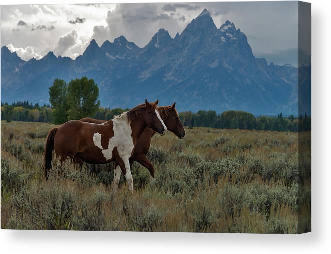 Horses In Grand Teton National Park Canvas Print Canvas Art By Mark Newman