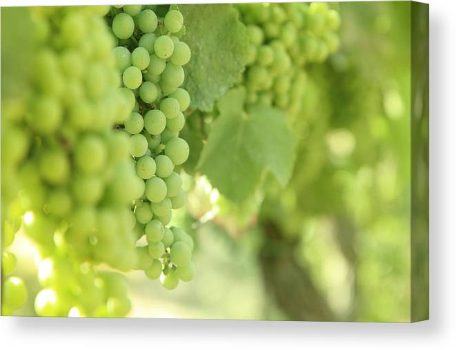 Alcohol Canvas Print featuring the photograph Italian Spumante White Grapes by Tostphoto