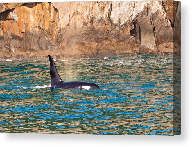 Canvas Print featuring the photograph Killer Whale by Richard Jack-James