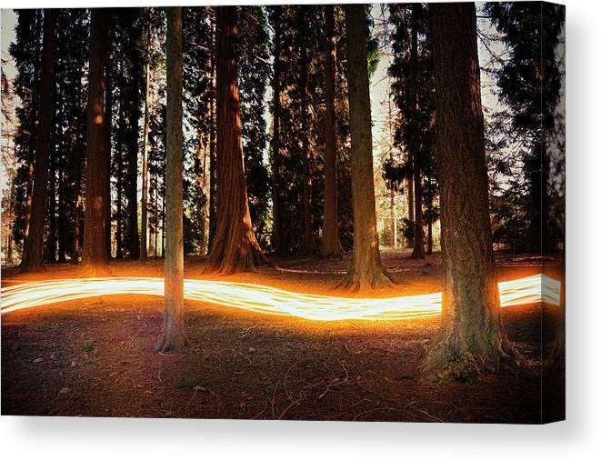 Kent Canvas Print featuring the photograph Light Trail Passing Around Trees by Robert Decelis Ltd