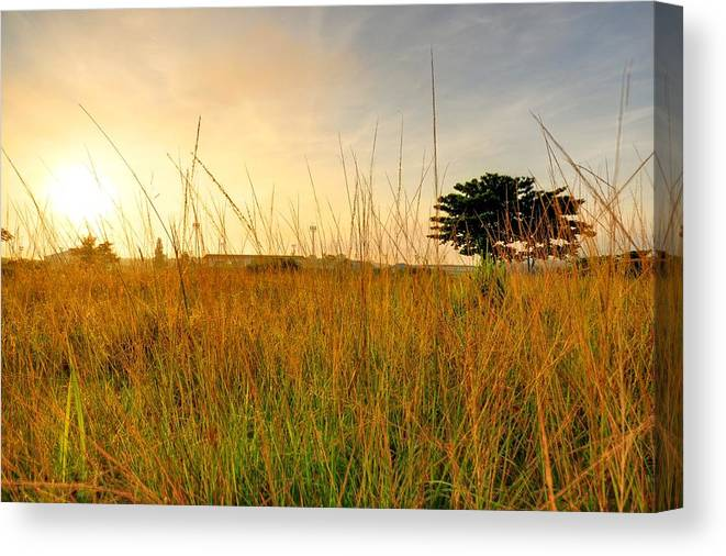 Scenics Canvas Print featuring the photograph Morning Sun Shining Through The Tree by Primeimages