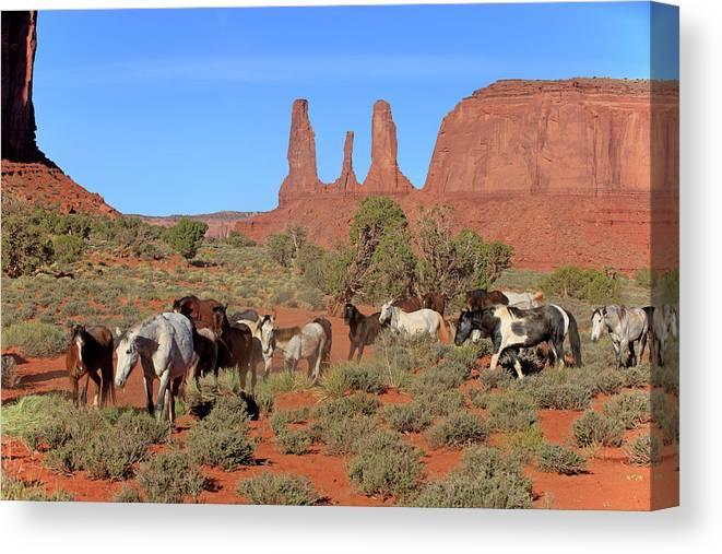 Scenics Canvas Print featuring the photograph Mustang by Tier Und Naturfotografie J Und C Sohns