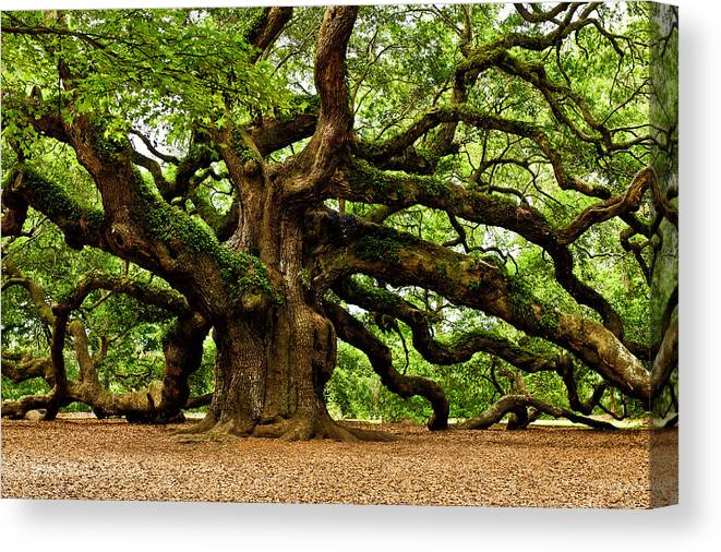 Charleston Canvas Print featuring the photograph Mystical Angel Oak Tree by Louis Dallara