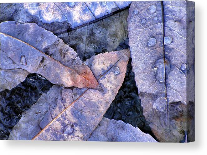Leaf Canvas Print featuring the photograph November Blues by Bill Morgenstern