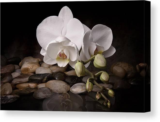 Arrangement Canvas Print featuring the photograph Orchid - Sensuous Virtue by Tom Mc Nemar