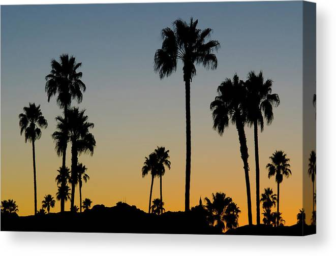 Scenics Canvas Print featuring the photograph Palm Trees At Sunset by Chapin31