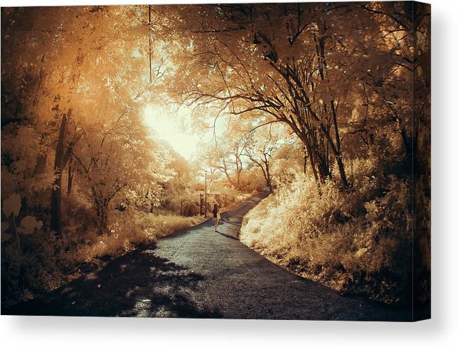 Shadow Canvas Print featuring the photograph Pathway To Wonderland by D3sign