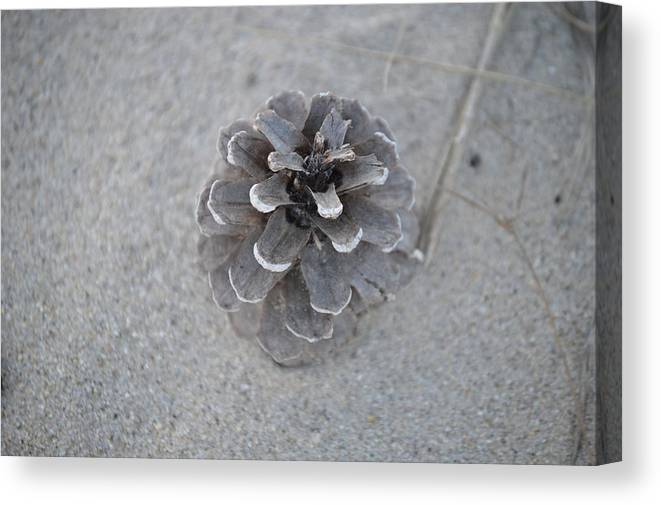 Pine Cone Canvas Print featuring the photograph Pine Cone by Jessica Cruz