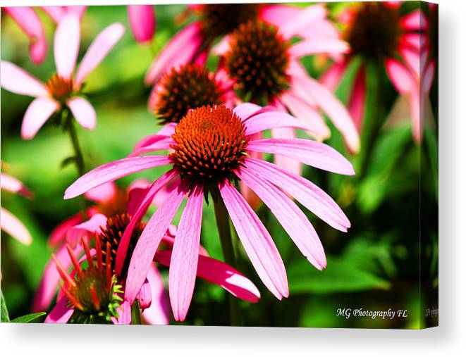 Pink Canvas Print featuring the photograph Pink Beauty by Marty Gayler