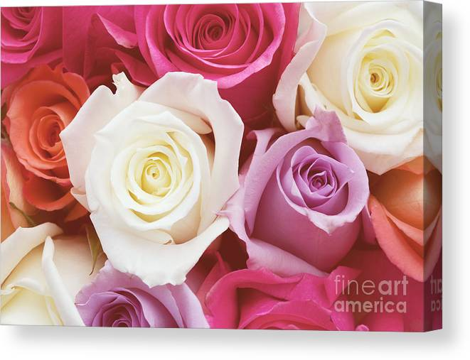 Romantic Flower Photo Canvas Print featuring the photograph Romantic Rose Garden by Kim Fearheiley