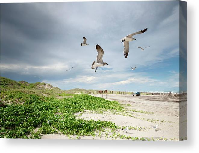 Scenics Canvas Print featuring the photograph Seagulls In Flight At North Padre by Olga Melhiser Photography