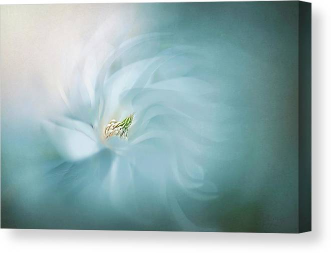 Macro Canvas Print featuring the photograph Serene by Jacky Parker