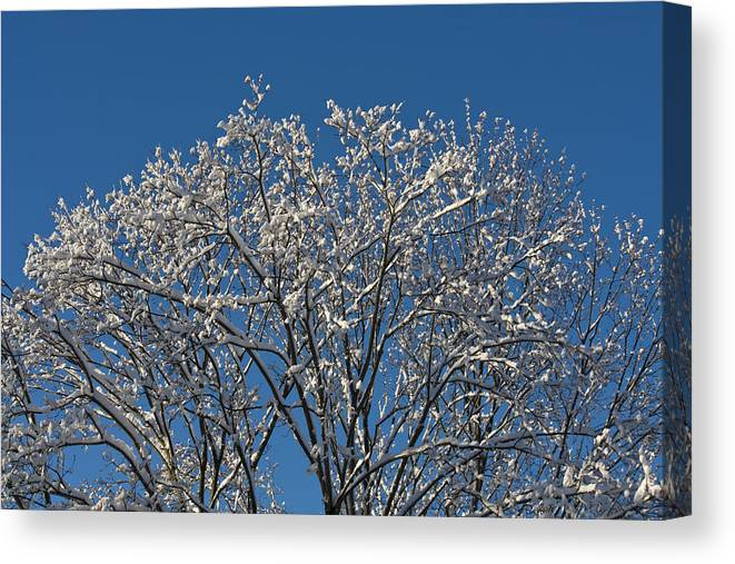 Keith Mucha Canvas Print featuring the photograph Snow Fan by Teresa Mucha
