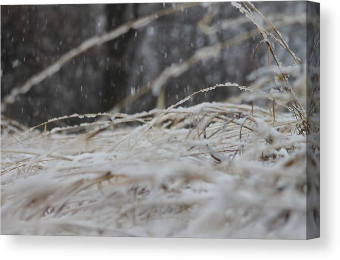 Snow Canvas Print featuring the photograph Snow Is Falling by Todd Androy