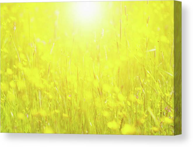 Tranquility Canvas Print featuring the photograph Spring Growth by Rolfo Rolf Brenner
