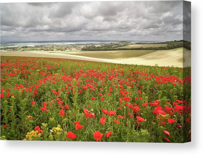 Scenics Canvas Print featuring the photograph Sweeping Golden Fields by Getty Images