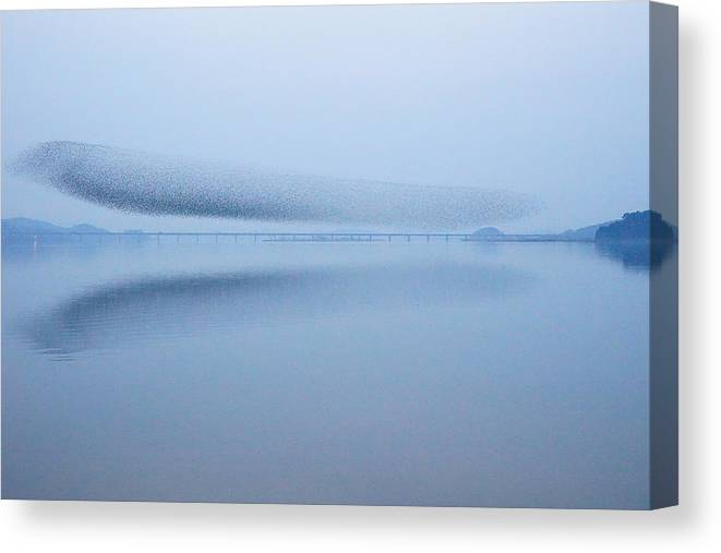 Scenics Canvas Print featuring the photograph The Baikal Teals 2 by Penboy