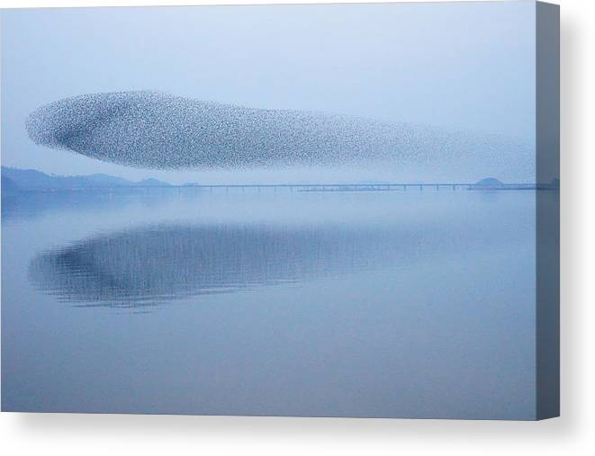 Scenics Canvas Print featuring the photograph The Baikal Teals by Penboy