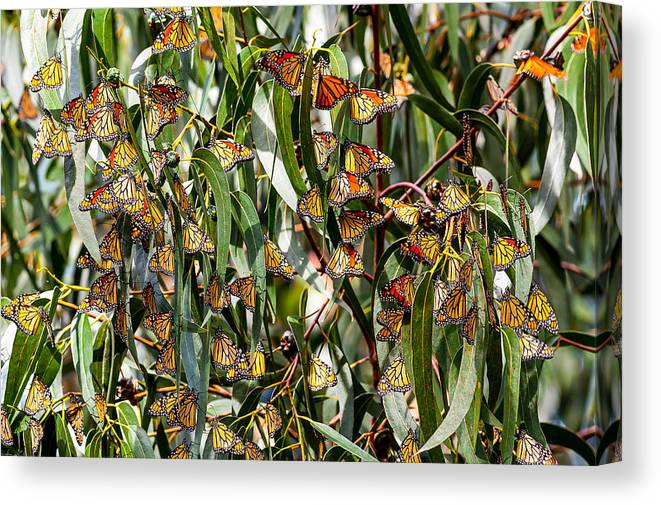 Nature Canvas Print featuring the photograph The Gathering by Paul Johnson