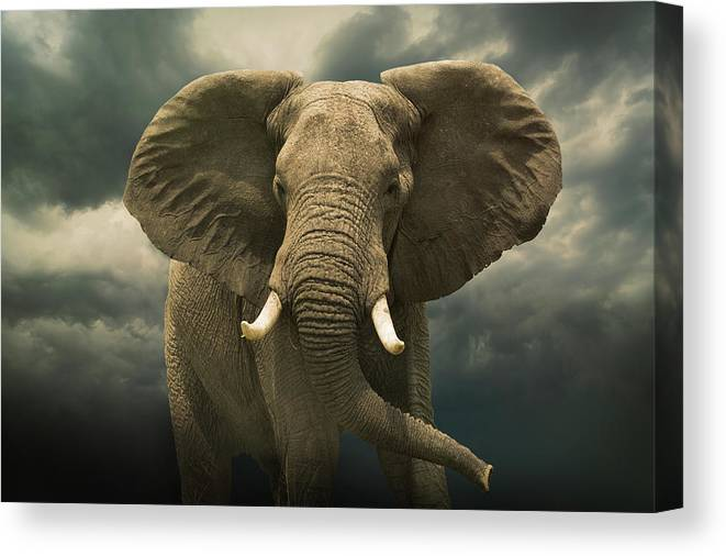 Kenya Canvas Print featuring the photograph Threatening African Elephant Under by Buena Vista Images