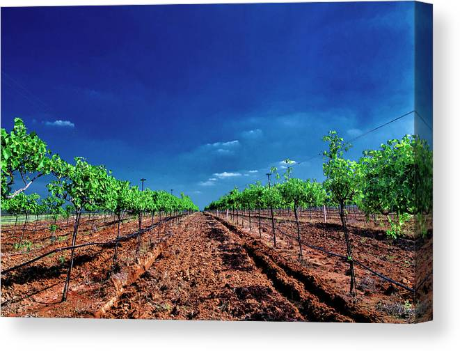 Tranquility Canvas Print featuring the photograph Torre Di Pietra Winery by Dean Fikar
