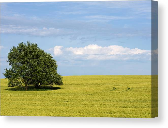 Grass Family Canvas Print featuring the photograph Trees In Wheat Field by Simplycreativephotography