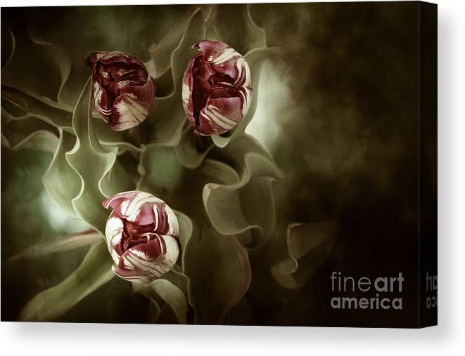 Digital Painting Canvas Print featuring the photograph Tulips In The Mist by Beve Brown-Clark Photography
