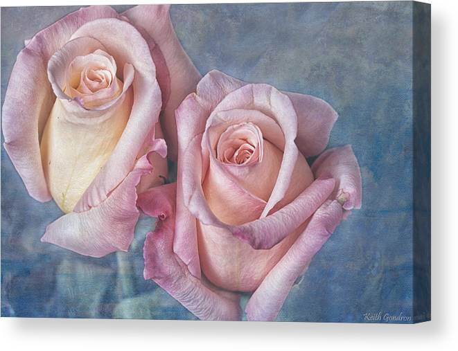 Two Canvas Print featuring the photograph Two Pink Roses by Keith Gondron