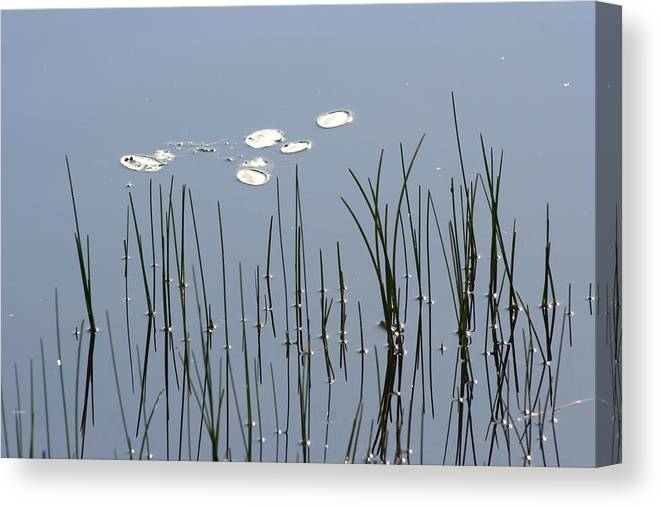 Water Lilies Canvas Print featuring the photograph Water Lilies by Dr Carolyn Reinhart
