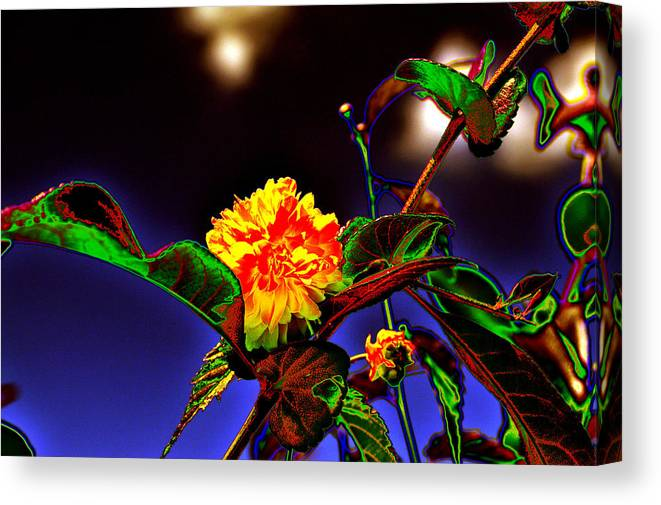 Background Canvas Print featuring the photograph Yellow Queen on the morning dream by Adrian Bud