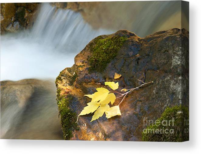 Autumn Canvas Print featuring the photograph Cottonwood Cascade in Autumn by Dennis Hammer