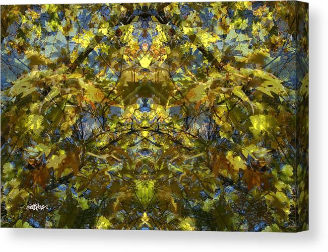 Golden Rorschach Canvas Print featuring the photograph Golden Rorschach by Seth Weaver