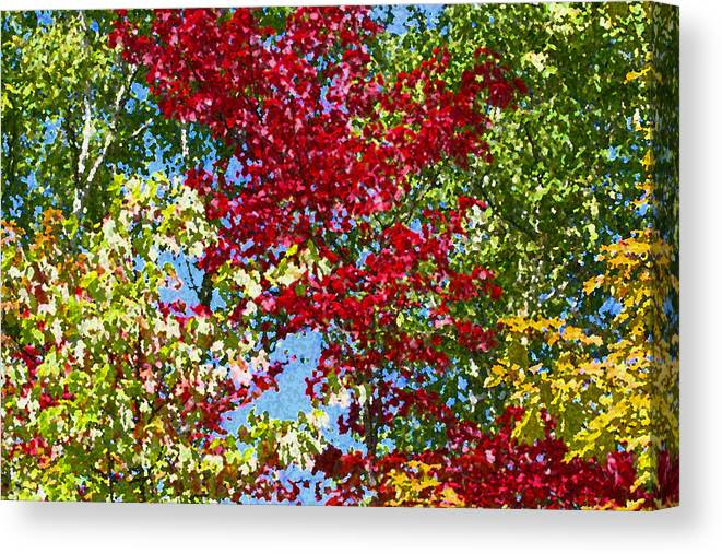 Colorful Canvas Print featuring the photograph Muskoka Autumn Leaves by Dr Carolyn Reinhart