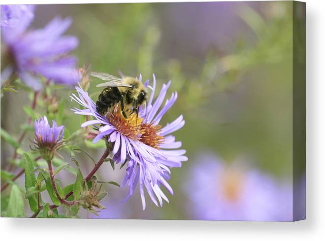Canvas Print featuring the photograph Nectar one by Alan Rutherford