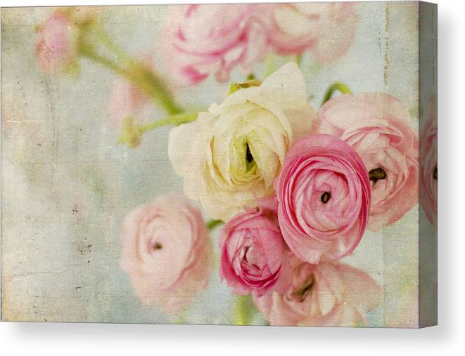 Ranunculus Canvas Print featuring the photograph One Fine Day by Kristy Campbell