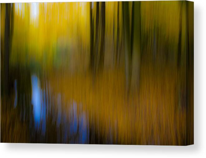 Forest Canvas Print featuring the photograph The Creek by Andy Bitterer