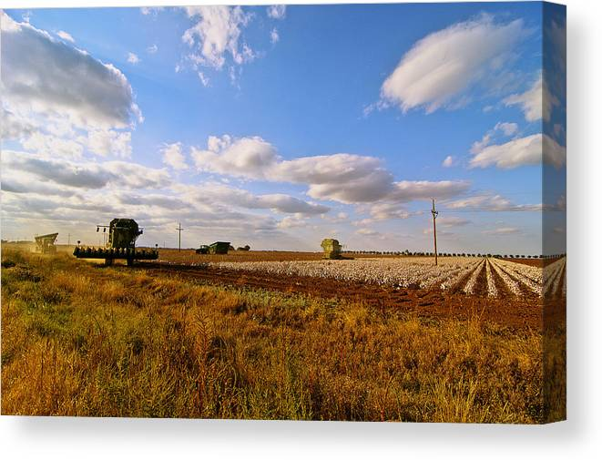 Farming Canvas Print featuring the photograph West Texas Cotton Harvest by Robert Hudnall