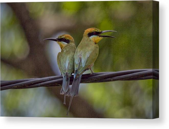 Rainbow Bee-eaters Canvas Print featuring the photograph You Watch My Back and I Watch Yours V2 by Douglas Barnard