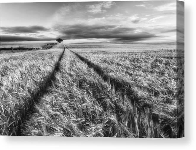 Poland Canvas Print featuring the photograph Countryside by Piotr Krol (bax)