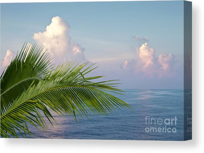 Palm Canvas Print featuring the photograph Palm and ocean by Blink Images