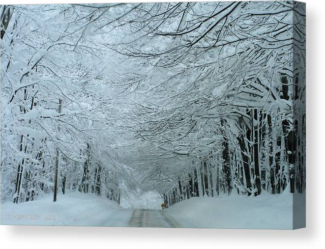Blizzard Canvas Print featuring the photograph Snow Tunnel by Carolyn Postelwait
